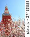 桜 東京タワー さくらの写真 27485888