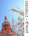 桜 東京タワー さくらの写真 27485893