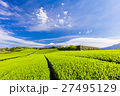 茶畑と富士山 27495129