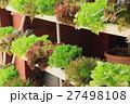 Lettuce hydroponics 27498108