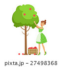 Woman Picking Organic Apples From A Tree 27498368