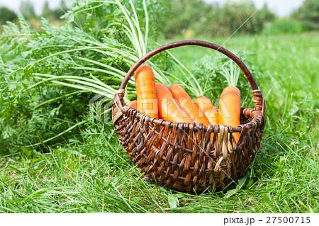 Wooden wicker basket with fresh carrots  27500715