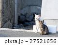相島の猫親子 27521656