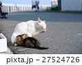 相島の猫親子 27524726