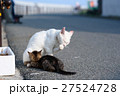 相島の猫親子 27524728