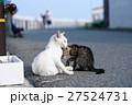 相島の猫親子 27524731