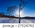 雪景色 青空 シラカバの写真 27526762