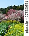 菜の花のある風景、千葉県印西市吉高 27533651