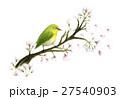 メジロと桜 27540903