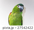 コミドリコンゴウインコ(Hands Macaw) 27542422