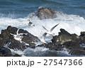 波とゆりかもめ 27547366