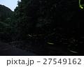 蛍 夜 昆虫の写真 27549162