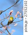 梅 花 小鳥の写真 27552102