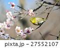 梅 花 小鳥の写真 27552107