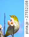 梅 花 小鳥の写真 27552108