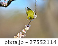 梅 花 小鳥の写真 27552114
