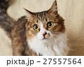 猫 なっちゃん 27557564