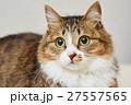 猫 なっちゃん 27557565