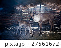 Reindeers in cattle-shed. 27561672