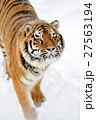 動物 タイガー トラの写真 27563194