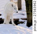 ゆき スノー 雪の写真 27563962