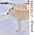 ゆき スノー 雪の写真 27563969