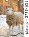 動物 羊 ひつじの写真 27564031