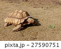 ケヅメ陸亀 27590751