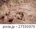 とかげ トカゲ は虫類の写真 27593970