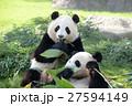 パンダ(2才) 27594149