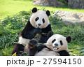 パンダ(2才) 27594150
