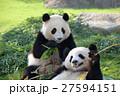 パンダ(2才) 27594151