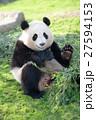 パンダ(2才) 27594153