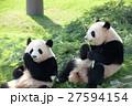 パンダ(2才) 27594154
