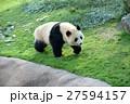 パンダ(2才) 27594157