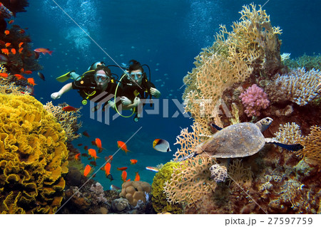 The loving couple dives among corals and fishes in the ocean 27597759