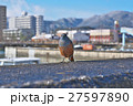 真冬の琵琶湖のイソヒヨドリ 27597890