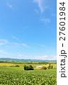 北海道 美瑛の広大な大地 27601984