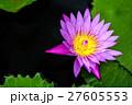 花 フラワー 湖の写真 27605553