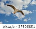 ユリカモメ 野鳥 鳥の写真 27606851