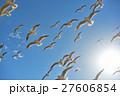 ユリカモメ 野鳥 鳥の写真 27606854