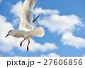 ユリカモメ 野鳥 鳥の写真 27606856