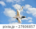 ユリカモメ 野鳥 鳥の写真 27606857