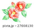 椿 水彩 植物のイラスト 27608130