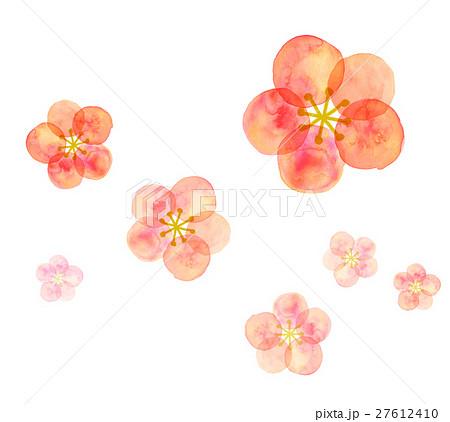 梅の花 水彩 27612410