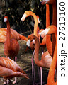 フラミンゴ 鳥 鳥類の写真 27613160