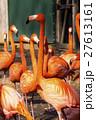 スミソニアン動物園 フラミンゴ 鳥の写真 27613161