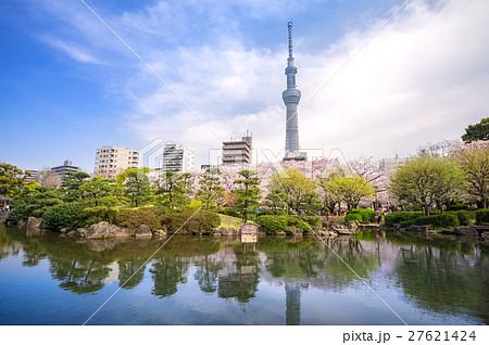 東京スカイツリーと墨田公園の桜 27621424