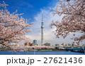 東京スカイツリー 墨田公園 桜の写真 27621436