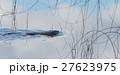 ビーバ ビーバー 動物の写真 27623975